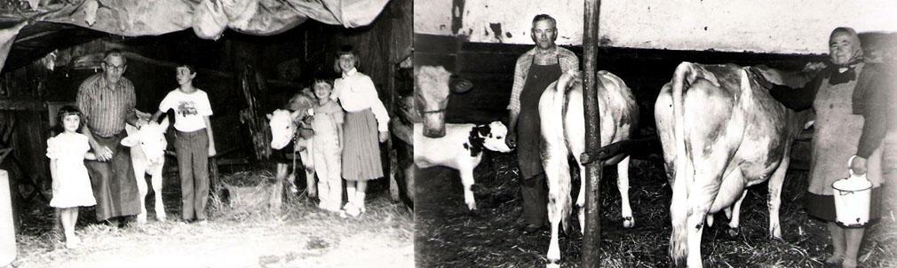 Kühe bei Michael und Anna Rosner