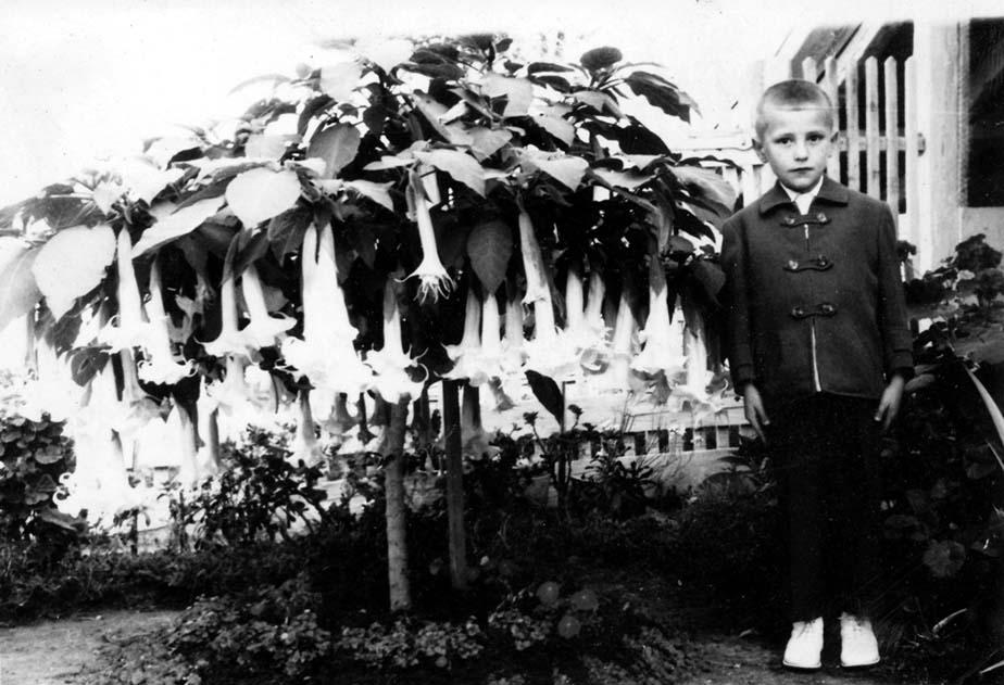 BlumHofDatura - Helmuth Goschy 1966